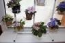 Подставка для цветов Фиалка