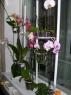 Подставка для цветов Орхидея